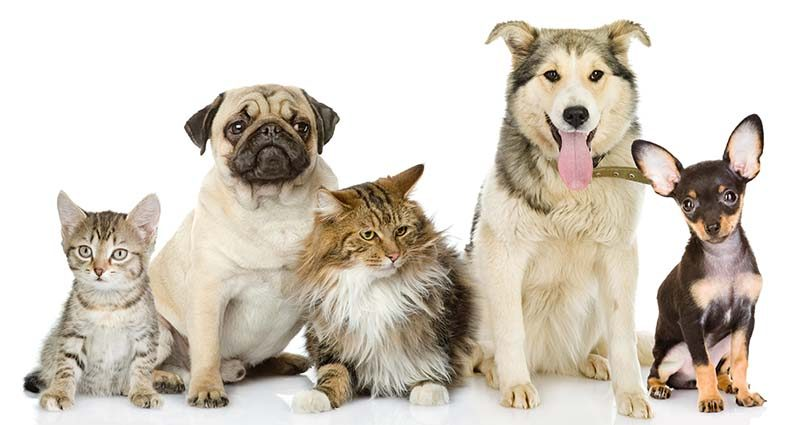 Pet health insurance for your family